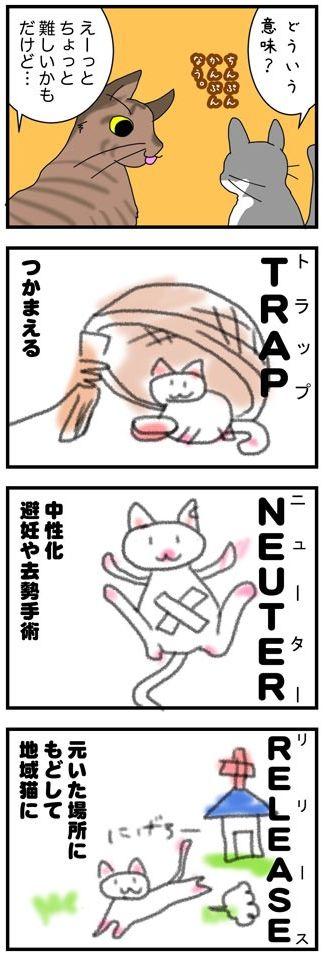 TNR-3