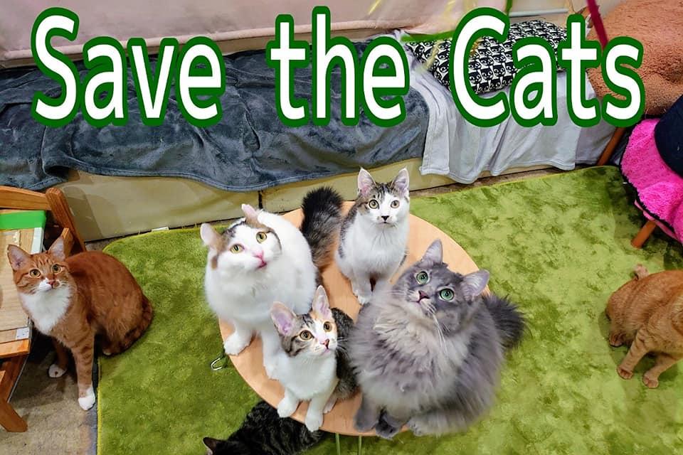 新型コロナウィルス対策で休業の保護猫カフェ 猫の居場所を守りたい